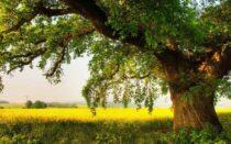 Θεραπευτικά Δέντρα για την αυλή σας